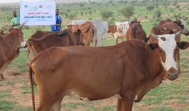 Directaid development Development Cows-1 1