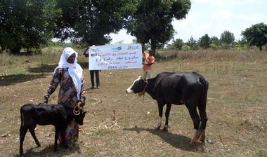 Directaid development Project Animal Production Cows-3 1