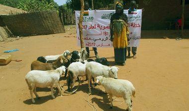 Directaid مشاريع التنمية Development Goat -1 6