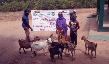 Directaid مشاريع التنمية Development Goat -1 7