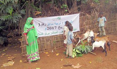 Directaid مشاريع التنمية Development Goat -1 9