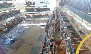 Directaid مشاريع التنمية Animal Production - Poultry - 1 1