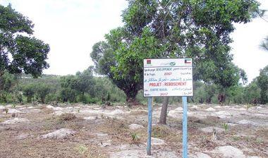 Directaid مشاريع التنمية Planting Menakara Orphanage 1