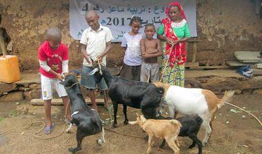 Directaid مشاريع التنمية Development Goat -1 11