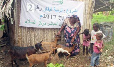 Directaid مشاريع التنمية Development Goat -1 10