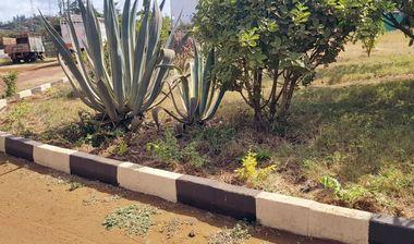 Directaid مشاريع التنمية Afforestation Orphanage 2