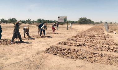 Directaid مشاريع التنمية Al Barakat Farm 1