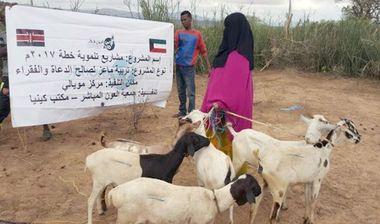 Directaid مشاريع التنمية Development Goat -1 13