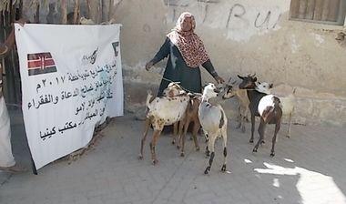Directaid مشاريع التنمية Development Goat -1 15
