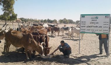 Directaid Water Projects Large artesian well - Mauritania 3