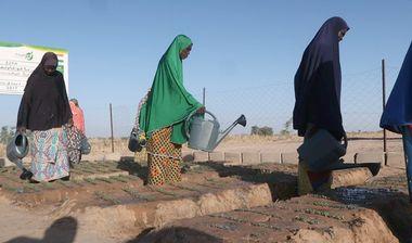 Directaid مشاريع التنمية Al Barakat Farm 3