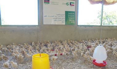 Directaid development Animal Production - Poultry - 2 1