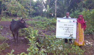 Directaid مشاريع التنمية مشروع انتاج حيواني - أبقار - للأسر الفقيرة 2 1
