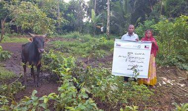 Directaid مشاريع التنمية مشروع انتاج حيواني - أبقار - للأسر الفقيرة 2 2
