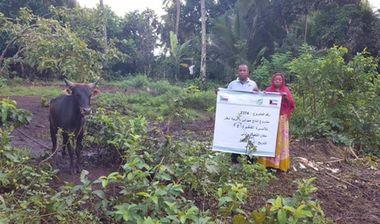 Directaid مشاريع التنمية مشروع انتاج حيواني - أبقار - للأسر الفقيرة 2 3