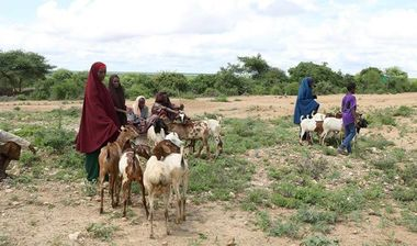Directaid مشاريع التنمية Project Animal-Goat-for Poor Family-1 3