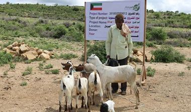 Directaid مشاريع التنمية Project Animal-Goat-for Poor Family-1 4