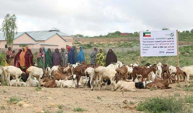 Directaid مشاريع التنمية Project Animal-Goat-for Poor Family-1 5