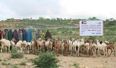 Directaid مشاريع التنمية Project Animal-Goat-for Poor Family-1 6