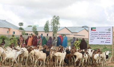Directaid development Project Animal-Goat-for Poor Family-1 8