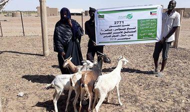 Directaid development Al-Sanabel Project - Goat Production-4 2