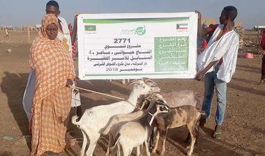 Directaid development Al-Sanabel Project - Goat Production-4 3