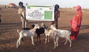 Directaid development Al-Sanabel Project - Goat Production-4 5