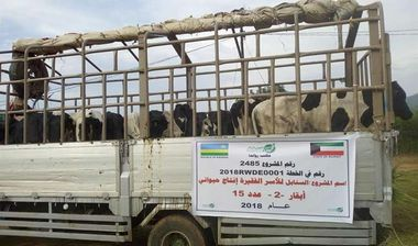 Directaid development Al-Sanabel Project Cow Production-2 2