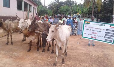 Directaid مشاريع التنمية Al-Sanabel Project Cow Production-5 1