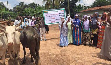 Directaid مشاريع التنمية Al-Sanabel Project Cow Production-5 3