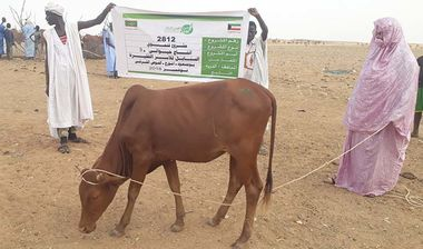 Directaid مشاريع التنمية Al-Sanabel Project Cow Production-9 2