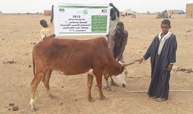 Directaid مشاريع التنمية Al-Sanabel Project Cow Production-9 5