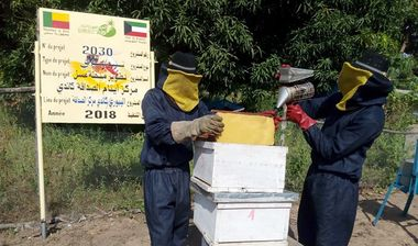 Directaid development Beehive Project For Candi Orphans Center 4