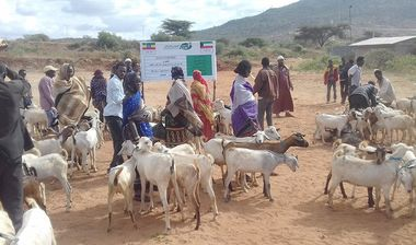 Directaid development Project Animal-Goat-for Poor Family-3 1