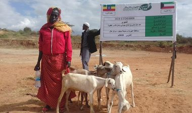 Directaid مشاريع التنمية Project Animal-Goat-for Poor Family-3 2