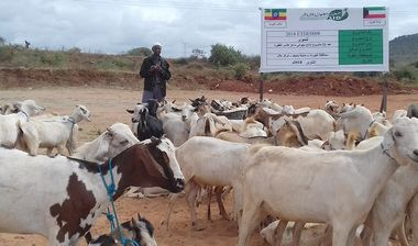 Directaid development Project Animal-Goat-for Poor Family-3 3