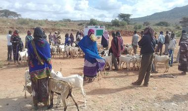 Directaid مشاريع التنمية Project Animal-Goat-for Poor Family-3 4