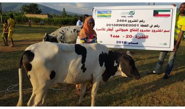 Directaid مشاريع التنمية project animal production cows-20 1