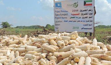 Directaid مشاريع التنمية Al-Duhaa Farm 4