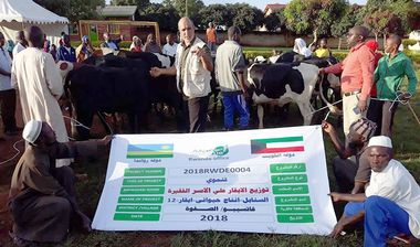 Directaid مشاريع التنمية Al-Sanabel Project Cow Production-12 5