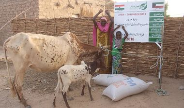 Directaid  Al-Sanabel Project Cow Production-6 1