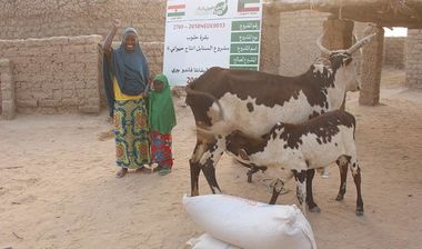 Directaid مشاريع التنمية Al-Sanabel Project Cow Production-6 2