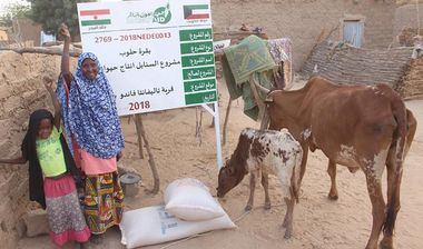 Directaid مشاريع التنمية Al-Sanabel Project Cow Production-6 3