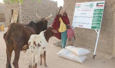 Directaid مشاريع التنمية Al-Sanabel Project Cow Production-6 4