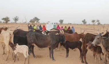 Directaid مشاريع التنمية Al-Sanabel Project Cow Production-6 5