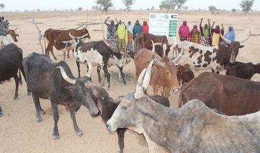 Directaid مشاريع التنمية Al-Sanabel Project Cow Production-6 6