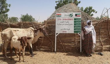 Directaid مشاريع التنمية Al-Sanabel Project Cow Production-8 2