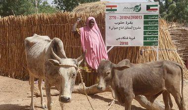 Directaid مشاريع التنمية Al-Sanabel Project Cow Production-8 3