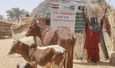 Directaid مشاريع التنمية Al-Sanabel Project Cow Production-8 4