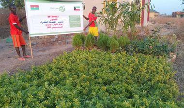 Directaid مشاريع التنمية Green Yard Project 1